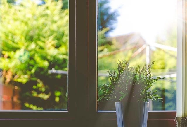 květina na okně.jpg