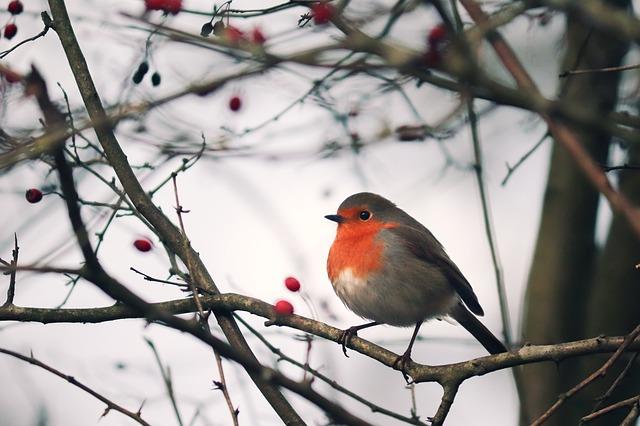 divoká zvěř v zimě